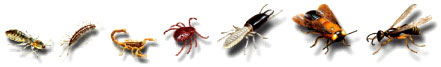 Pests and Insects